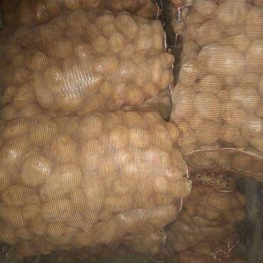 Болгарка бу - Кыргызстан: Картошка в оптом
