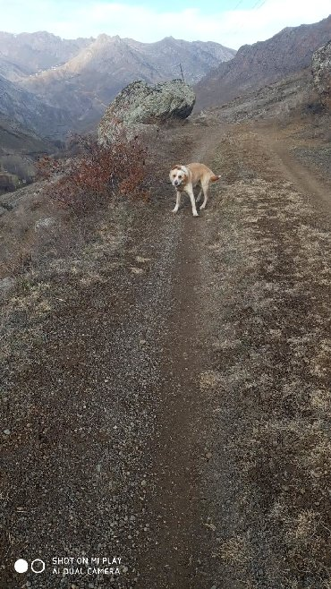Животные - Лерик: Собаки