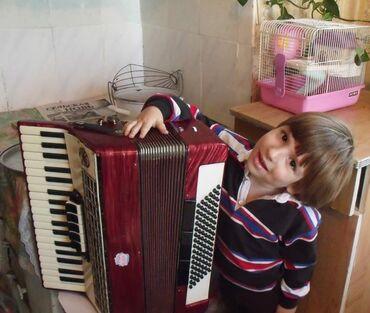 Спорт и хобби - Беловодское: Продаю аккордеон .красный цвет. В отличном состоянии