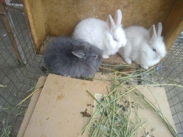Декоративные кролики - Кыргызстан: Продаю декоративных кроликов цвета разные . Количество 15 штук