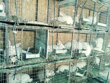 Продаю клетку для кроликов. почти в Бишкек