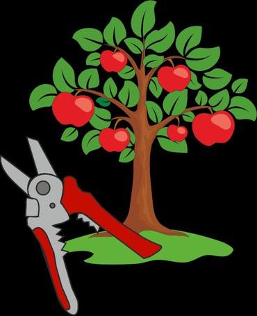 Обрезка плодовых деревьев.Профессиональная работа .Доступные цены. Наш