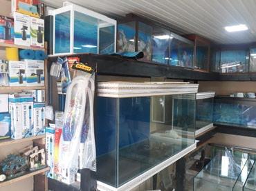 Bakı şəhərində Akvariumlar baliqlar avadanliqlar yemler hamsi bir unvanda etrafli