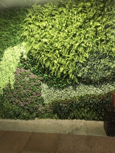 купить квартиру в новом доме бишкек в Кыргызстан: Фитостенки из искусственной зелени на любой вкус и цвет. Оформляем от