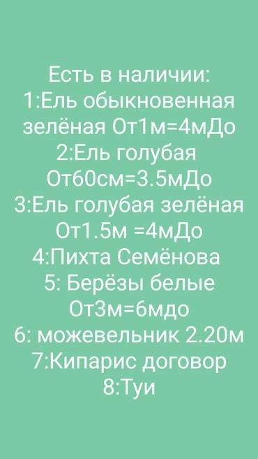 Продажа голубой ель Пихта Сосна крымская в Бишкек