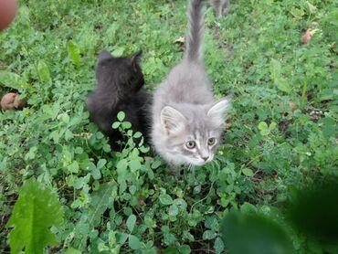 73 объявлений   ЖИВОТНЫЕ: Домашние котята в хорошие заботливые руки