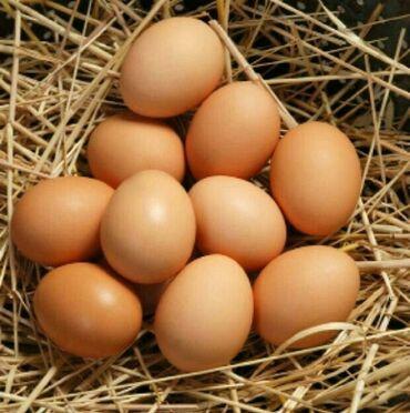 Молочные продукты и яйца - Кыргызстан: Домашние яйца Яйца куриные, свежие. Бишкек