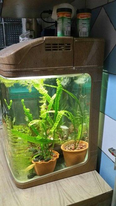 Заводской аквариум 80 литров в Бишкек