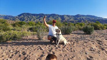 Бодики для мальчика - Кыргызстан: Открыты к резерву щенки лабрадора-ретривера. У мамы и отца высокие