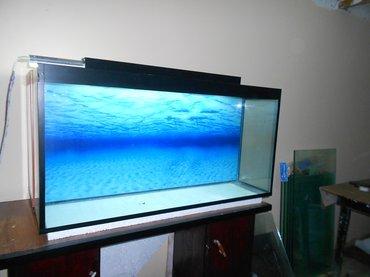 Bakı şəhərində Teze akvarium endirim olundu qiymetde