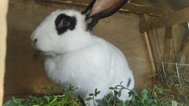 Животные - Арашан: Кролики