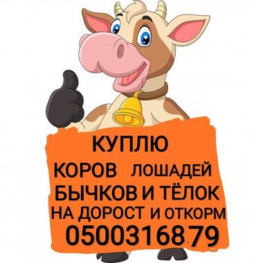 часы juicy couture в Кыргызстан: Куплю | Коровы, быки