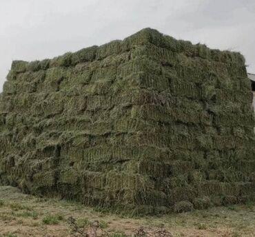 Животные - Бактуу-Долоноту: Куплю сено много