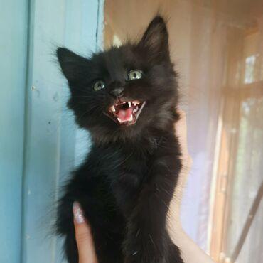 55 объявлений | ЖИВОТНЫЕ: Ищет самые добрые и ответственные руки красавчик котик по имени Изюм