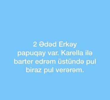 korella - Azərbaycan: 2 Ədəd Erkəy Papuqay var korella ilə barter edrəm. 1 ədəd də Ağ albino