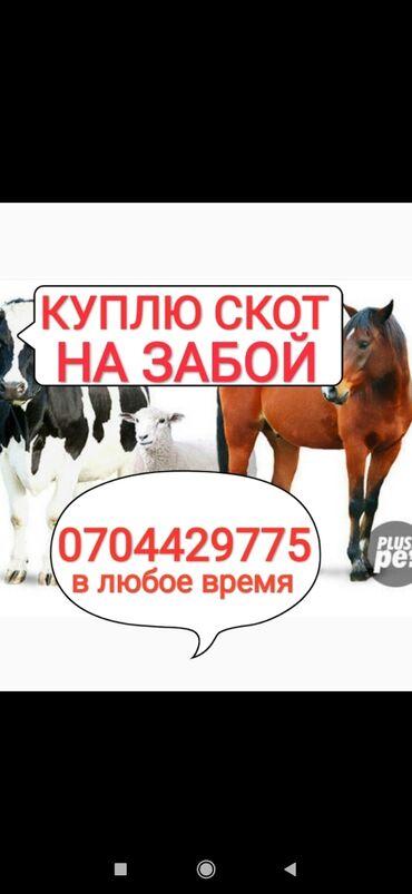 частный наркологический центр в Кыргызстан: Куплю скотину