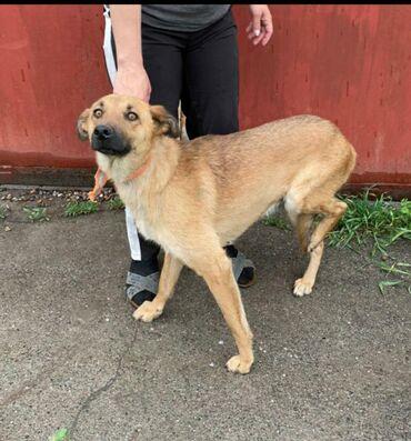 Фонд помощи животным Добрые руки ищет добрые руки для молодой собаки