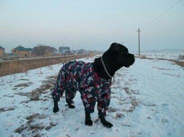 Пошив одежды для домашних животных. в Бишкек