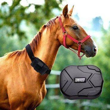 37 объявлений | ЖИВОТНЫЕ: GPS - Трекер.Продаю GPS трекеры для животных.Долгая автономность