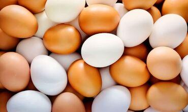 Животные - Кыргызстан: Продаю | Инкубационные яйца | Домашняя | Для разведения