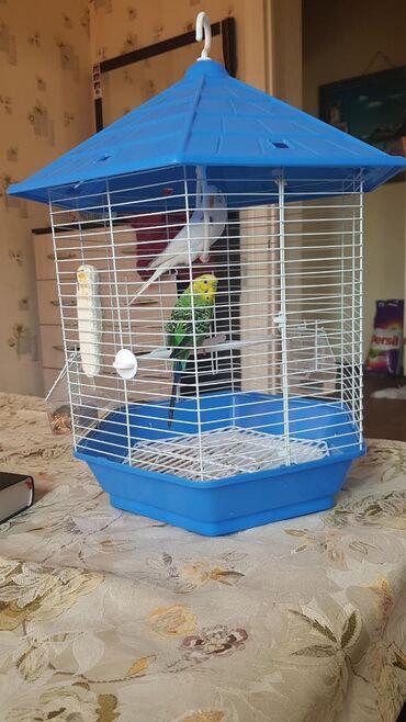 Волнистые птички продаю связи с перездом кормы домиком в подарок ода
