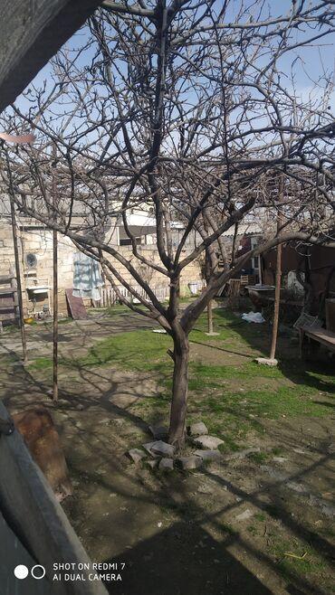 bmw 3 серия 325ti mt - Azərbaycan: Satılır Ev 56 kv. m, 3 otaqlı