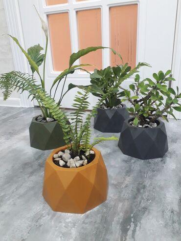 Otaq bitkiləri Xırdalanda: 8manat90qepik qabla birlikde catirilma var sarmasixlar 13manat