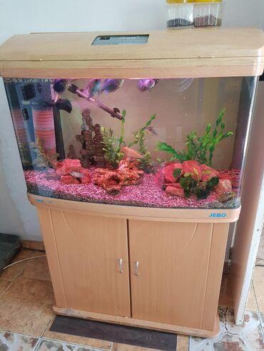 рыбы в Кыргызстан: Срочно ! Продаю аквариум на 180 литров с трубой . С рыбками Гурами3