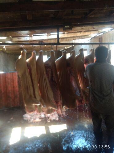 bez zhestkogo diska в Кыргызстан: Ищу работу на колбасный чех или грузчиком
