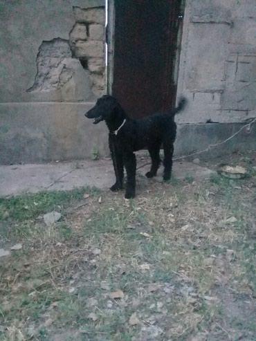 Тайган 1 год и месяц кабель вацап  в Сокулук