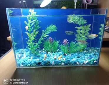 Продается маленький НОВЫЙ аквариум. На 7 литров. Полностью