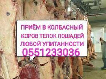 Приём скота по хорошей цене, в любое время в любом виде