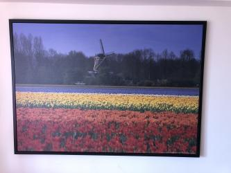 Painting of the Tulips of the Netherlands σε Μοσχάτο