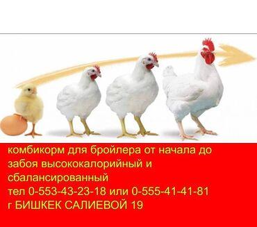 самсунг а 50 цена in Кыргызстан | SAMSUNG: Спец корм бройлер с высококачественным составом для   цыплят индюша