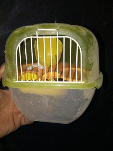Клетка для хомячков ( бамбуковых) либо в Бишкек