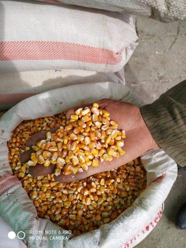 Кукуруза, рушенная, сухая, в Беловодское