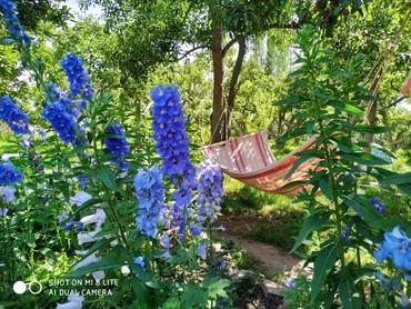 Отдых на Иссык-Куле - Корумду: Тихое место для хорошей компании. Уютные номера, все удобства, вайфай