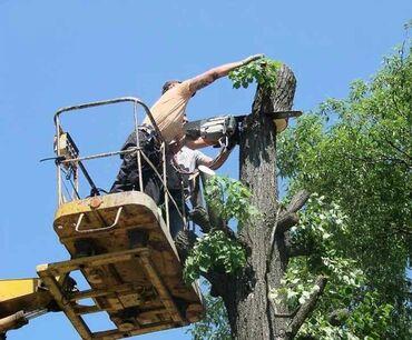 Бытовые услуги - Кыргызстан: Спил деревьев любой сложности! Быстро качественно и недорого !