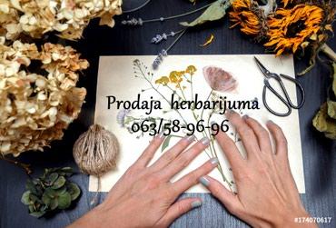 Herbarijum prodaja-Novo - Futog