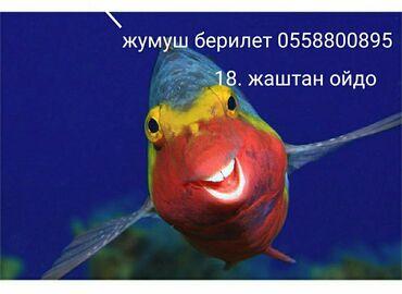 Упаковщицы - Кыргызстан: Жумуш берилет. Сатуучу консультант керек