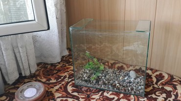 Продаю аквариум за 1000тс в Бишкек