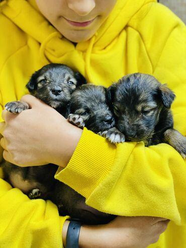 9677 объявлений: Бездомные щенята ищут дом с любящими хозяевами ! Предположительный