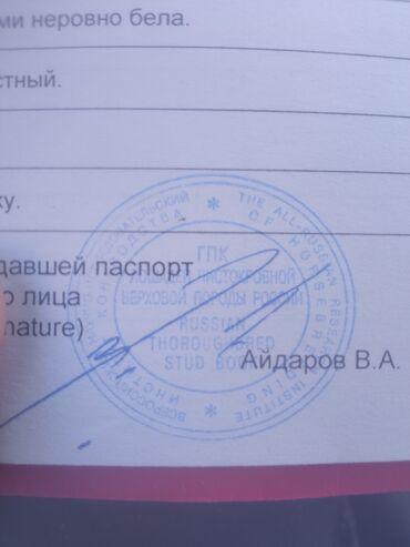 Животные - Тюп: Продается кобыла высших кровей жребая красный паспорт чипированная имп