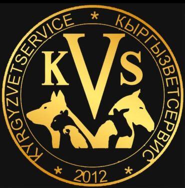 ресепшионист вакансии в Кыргызстан: Вакансия компании KVSCLINIC: требуется ветеринарный врач с опытом рабо