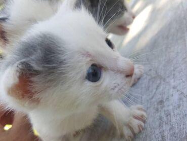 Отдаем котят в добрые руки даром !!! +