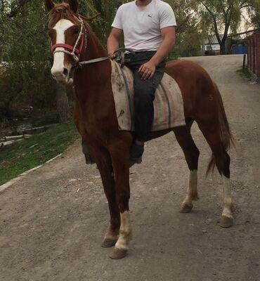 Продаю Коня
