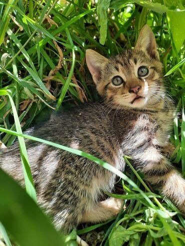 Животные - Орто-Сай: Ищем любящих и заботливых хозяев для этой малышки 1,5 месяца, девочка