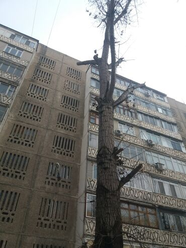 куплю дрова бишкек in Кыргызстан | УГОЛЬ И ДРОВА: Спил деревьев.пилю дрова.!. рублю дрова.спил дерева распил дров на