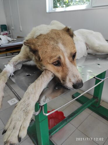 работа с ежедневной оплатой мороженое бишкек в Кыргызстан: Требуется Рабочий с проживанием,основные обязанности:уход за собаками
