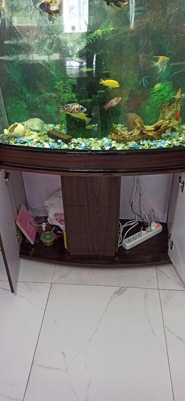 Продаю заводской аквариум с рыбками,со всеми принадлежностями, имеется